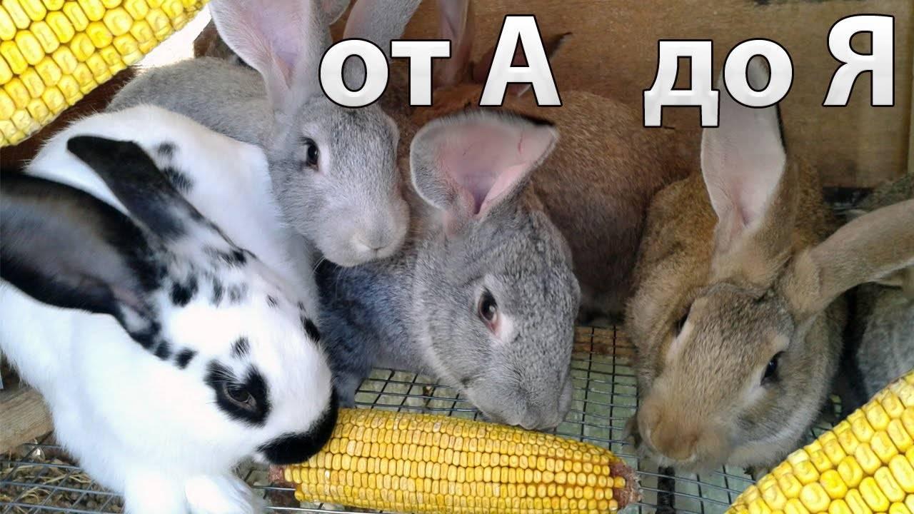 Чем кормить кроликов в домашних условиях: от а до я