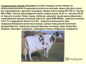 О молочных породах коров (характеристики и факторы, влияющие на продуктивность)