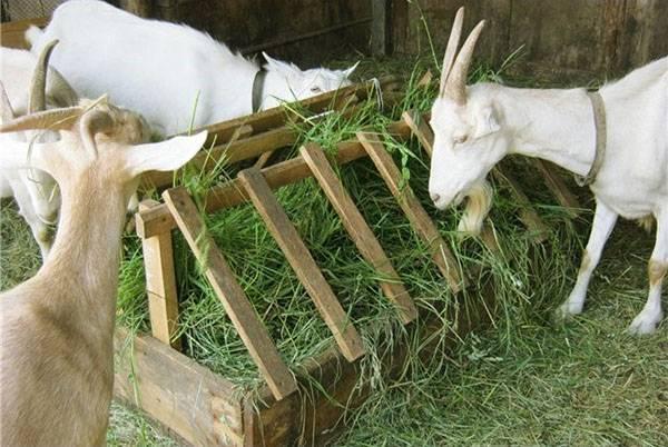 Разведение коз: основные виды и особенности бизнеса — cельхозпортал