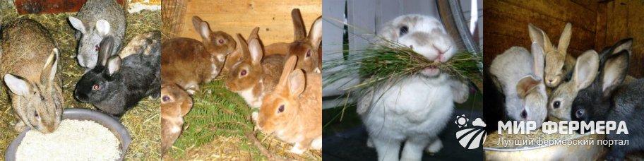 Чем и как кормить кроликов для быстрого роста