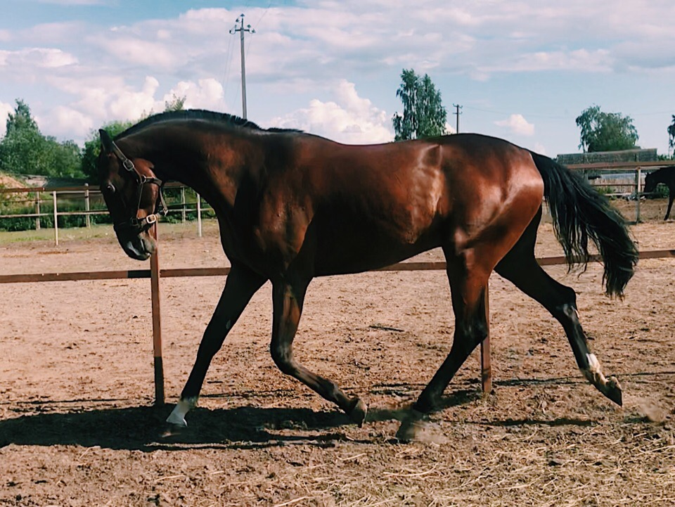 Конь мерин: описание, особенности характера, плюсы и минусы