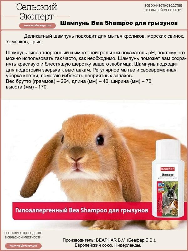 Можно ли мыть декоративных кроликов — как купать питомца в домашних условиях