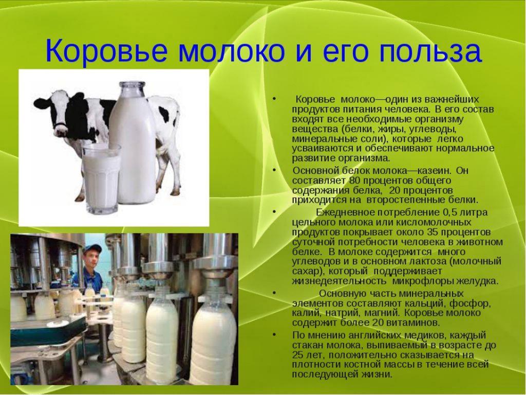 Полезные свойства и вред парного молока
