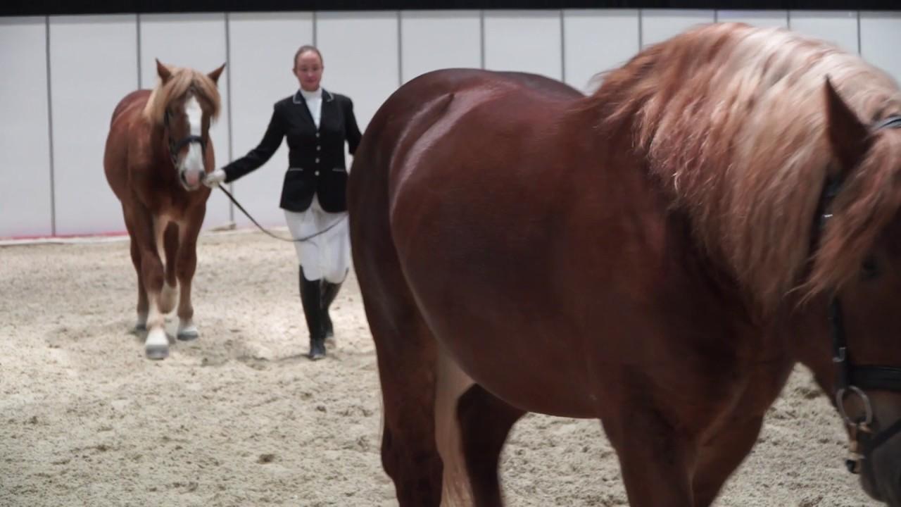 Лошадь породы битюг: фото и описание