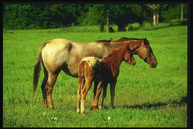 Питание лошадей — из чего состоит рацион скакунов