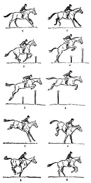 Как обучить лошадь верховой езде: план, физическая подготовка, индивидуальный подход