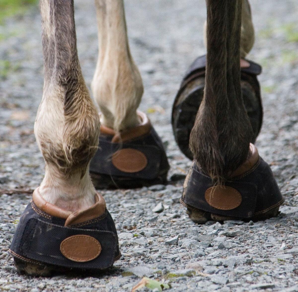 Копыта лошади — строение, уход, расчистка, болезни