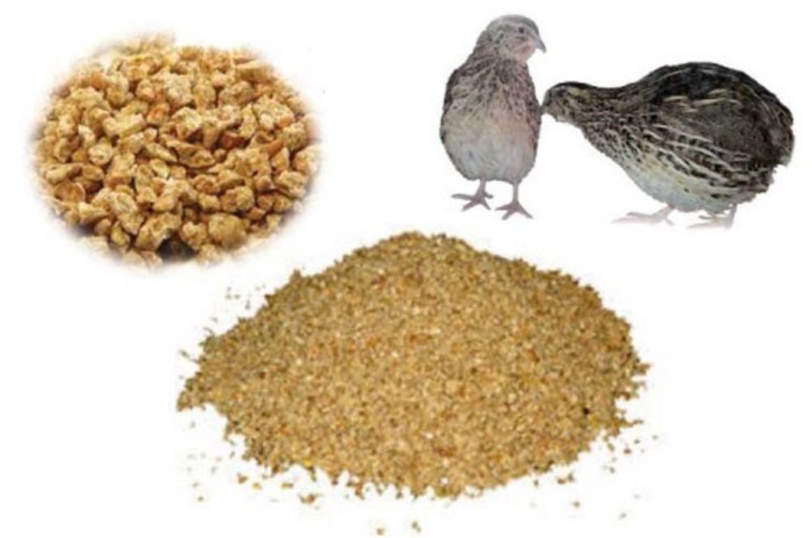 Чем кормить гусей? что едят гуси в домашних условиях? чем птицы питаются зимой? особенности кормления перед яйцекладкой