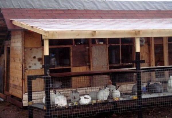 Как содержать и разводить кроликов в зимний период