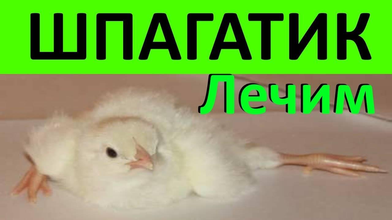✅ о дикой курице и диком петухе (банкивская джунглевая и цейлонская курицы) - tehnomir32.ru