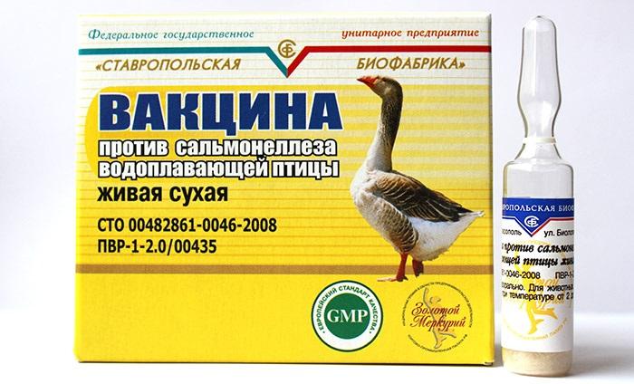 Болезни гусей: симптоматика и методы лечения в домашних условиях