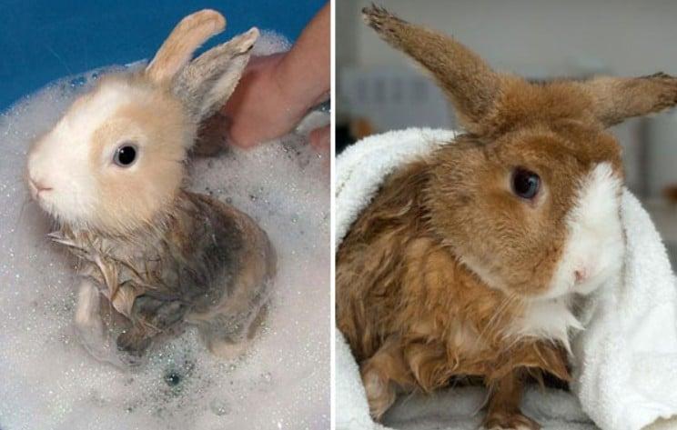 Как купать кролика: методы мытья, советы, видео и фото