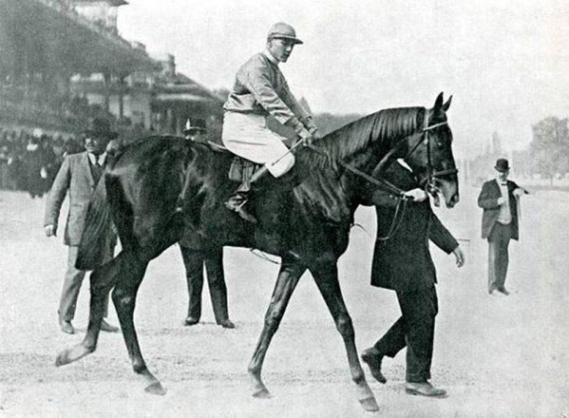 ✅ об арабской лошади: чистокровный скакун арабских кровей, описание, характеристики - tehnomir32.ru