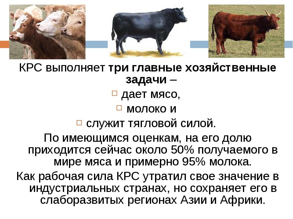 Костромская порода коров – характеристика, фото, отзывы