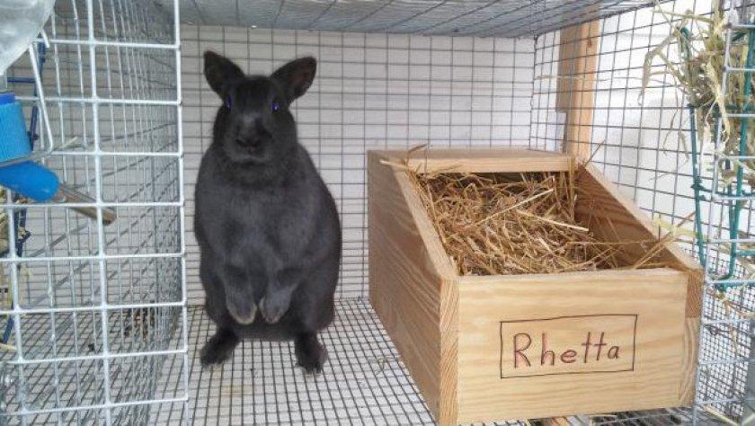 Как определить беременность крольчихи: основные признаки