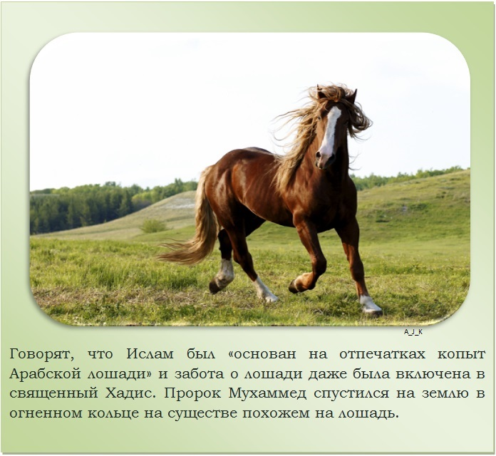 Самые лучшие породы лошадей в мире