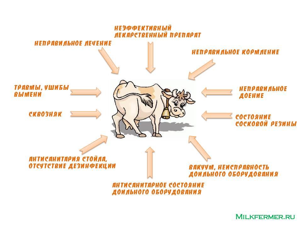 Болезни лошадей симптомы и лечение - народные средства