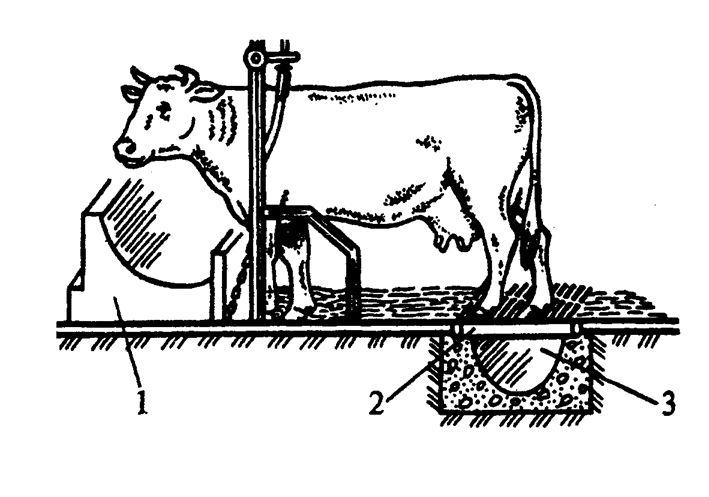 Как разместить животных и птицу в сарае