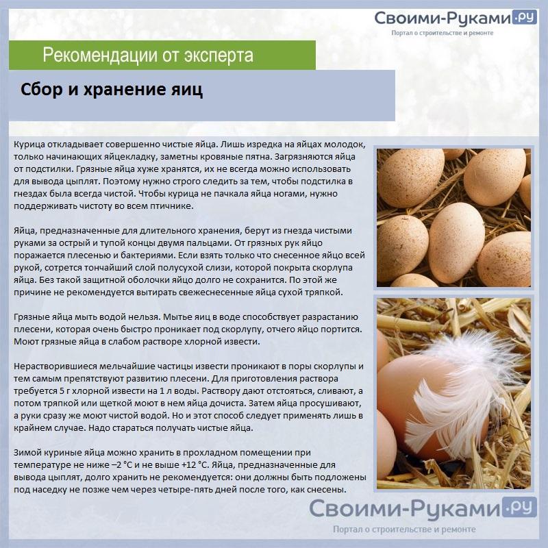 Почему курица несет яйца без скорлупы