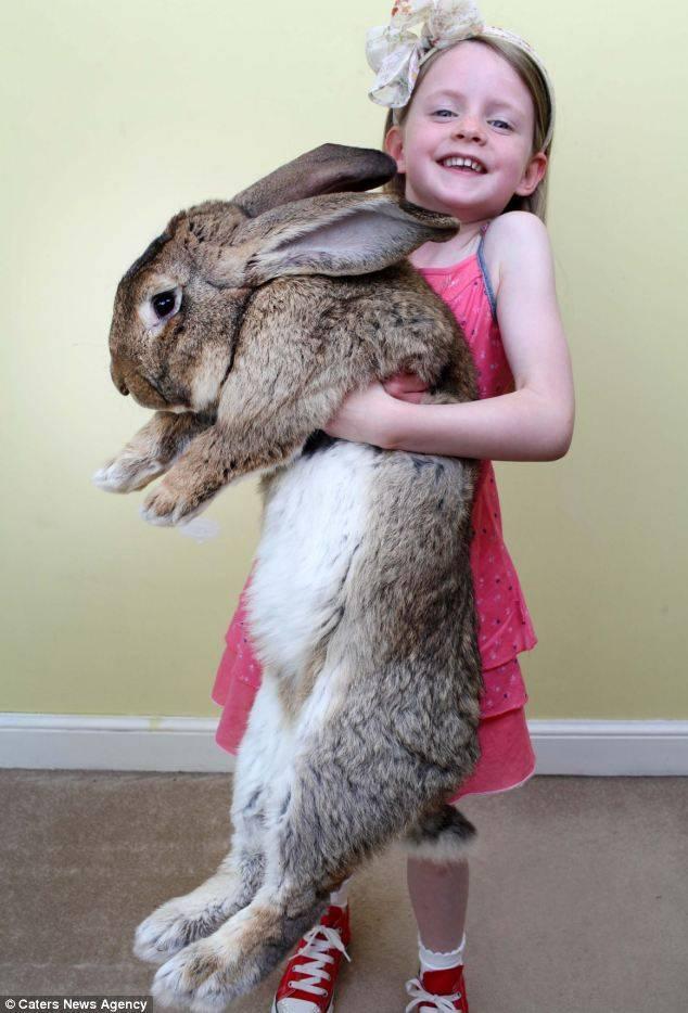 Какая порода самых больших кроликов, самые знаменитые гигантские кролики в мире