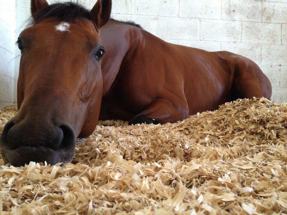 Что едят лошади: обзор типов кормов и составление рациона, как правильно кормить, лакомства и поение скакунов