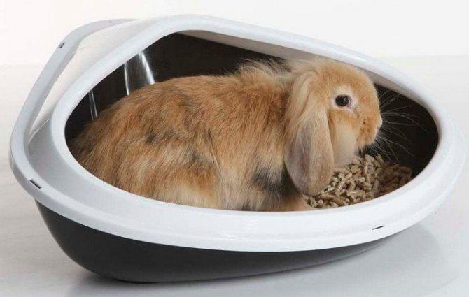 Как приучить кролика к лотку?