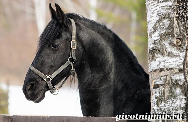Конь вороной масти: особенности и разновидности лошадей черного цвета