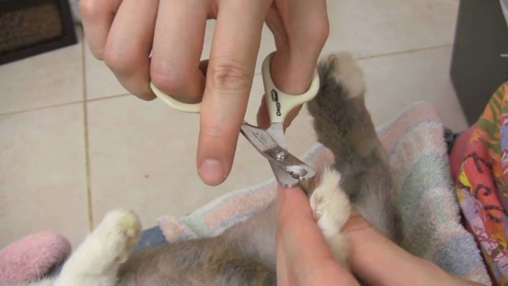 Кастрация и стерилизация кроликов: техника, как кастрируют и нужна ли она