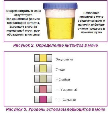 ✅ почему кролик пьет свою мочу: какого цвета должна быть моча, кровь в моче - tehnomir32.ru