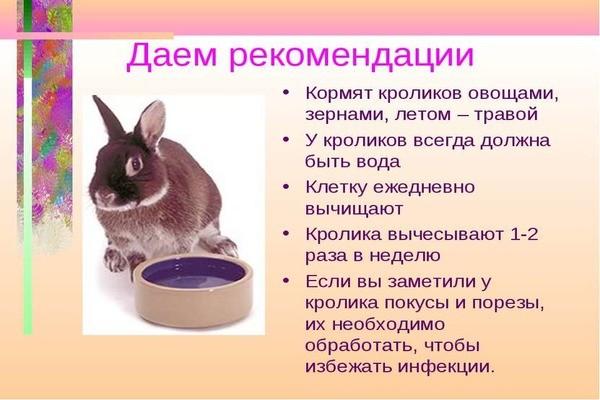 Можно ли давать кролику соль: нужна ли в рационе, каким способом и сколько