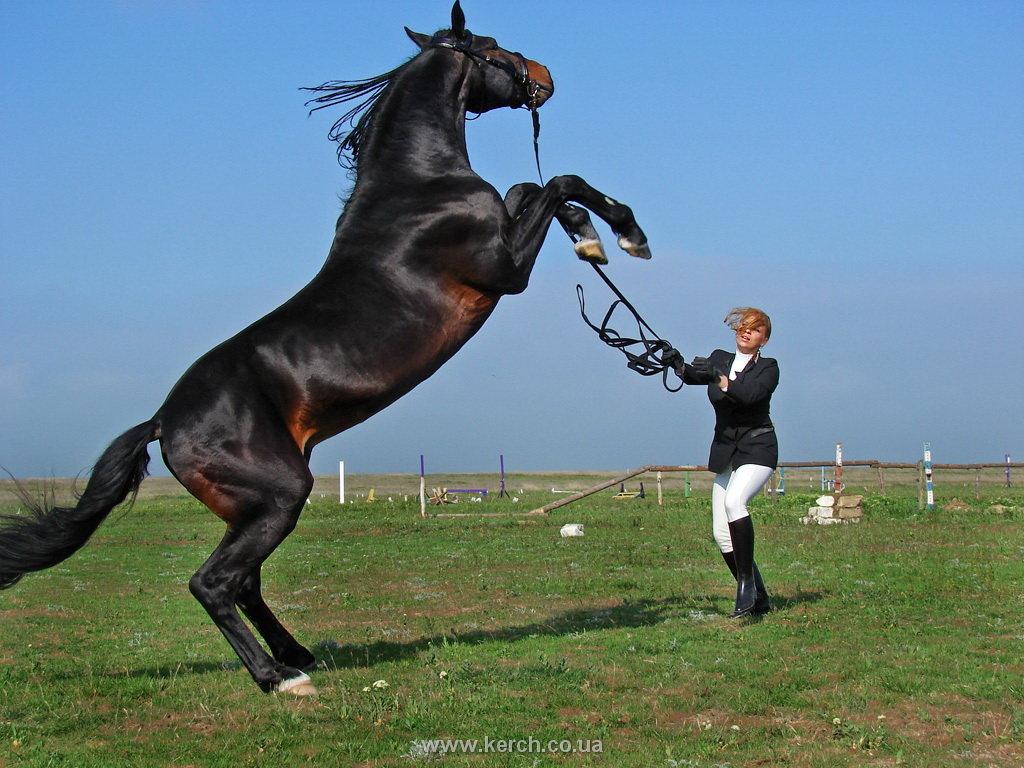 Лошадь на дыбах — почему лошадь ведет себя агрессивно?