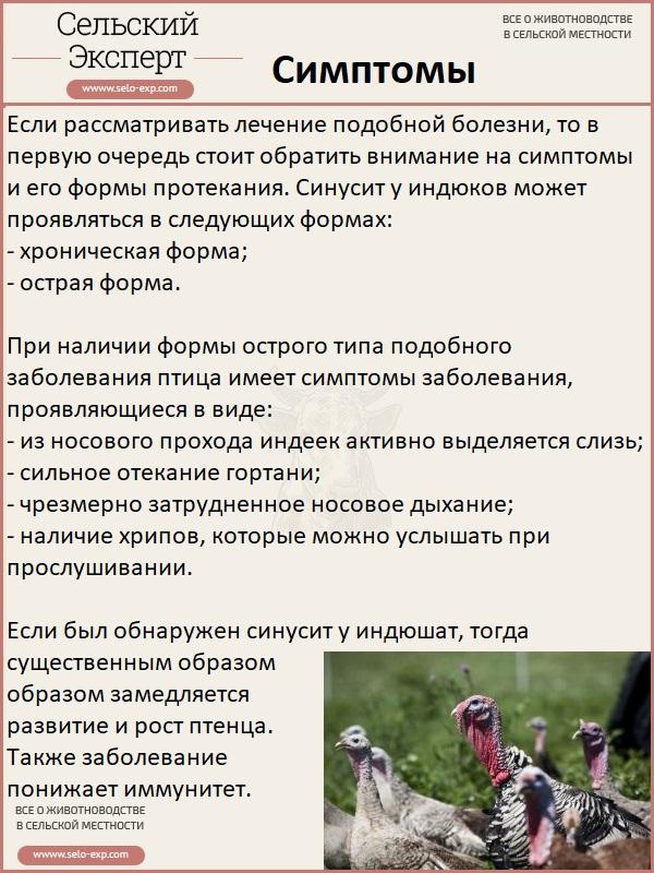✅ синусит у индюков симптомы и лечение - питомник46.рф