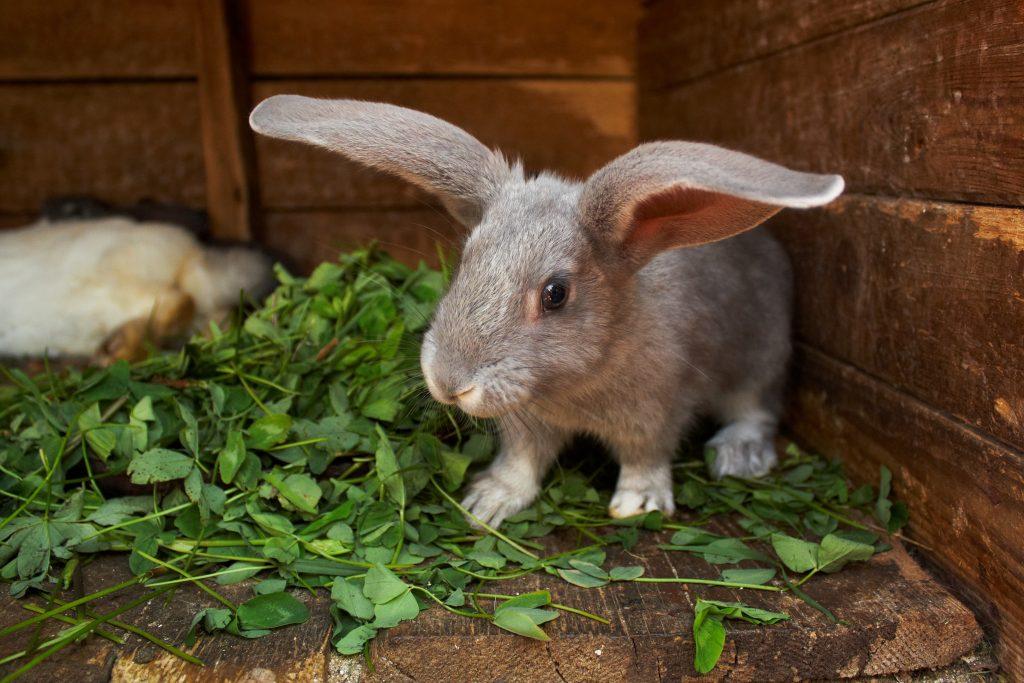 Сколько живут декоративные кролики. продолжительность жизни