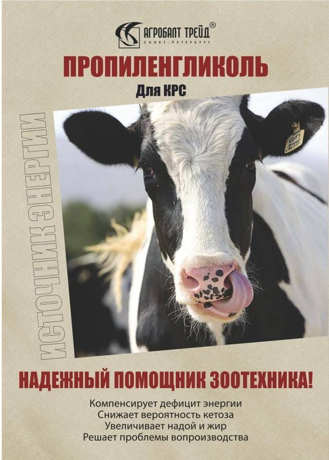 Кетоз у коров: причины, симптомы и лечение