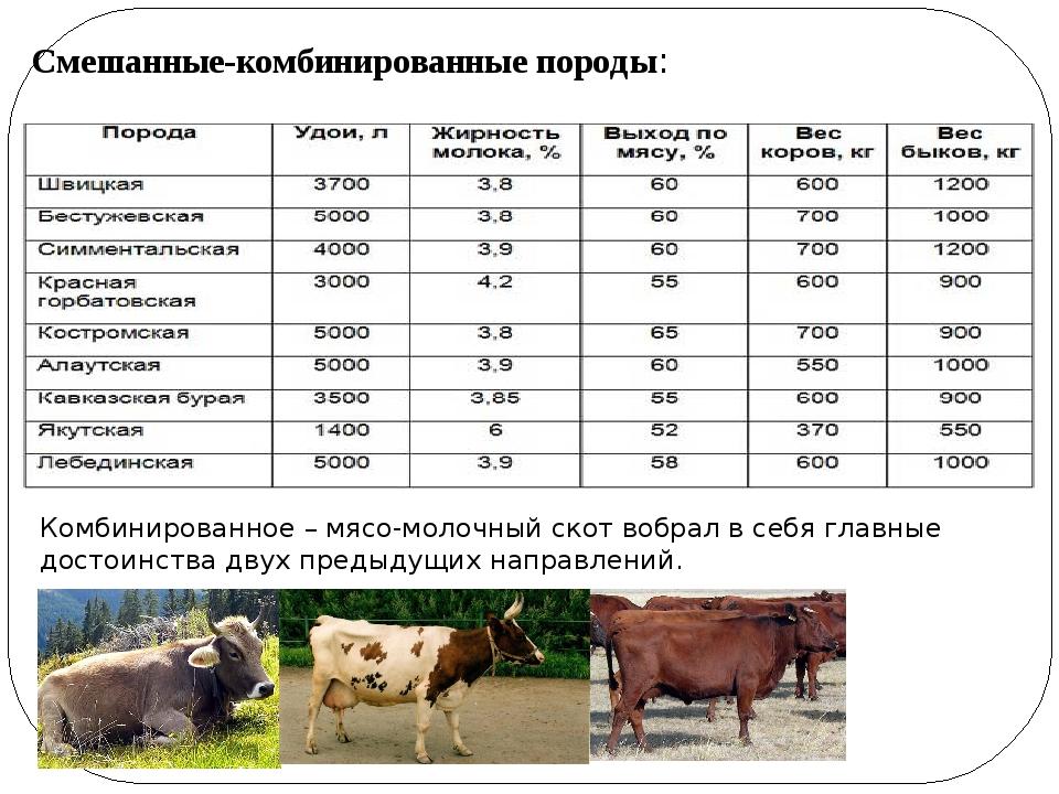 Молочные породы коров и быков. продуктивность молочного крс