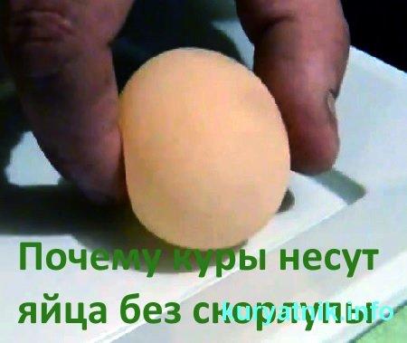 Почему куры несут яйца без скорлупы: причины и решение