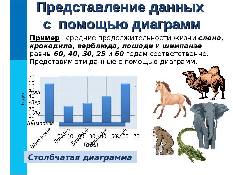 Сколько лет живут лошади: интересные факты и видео