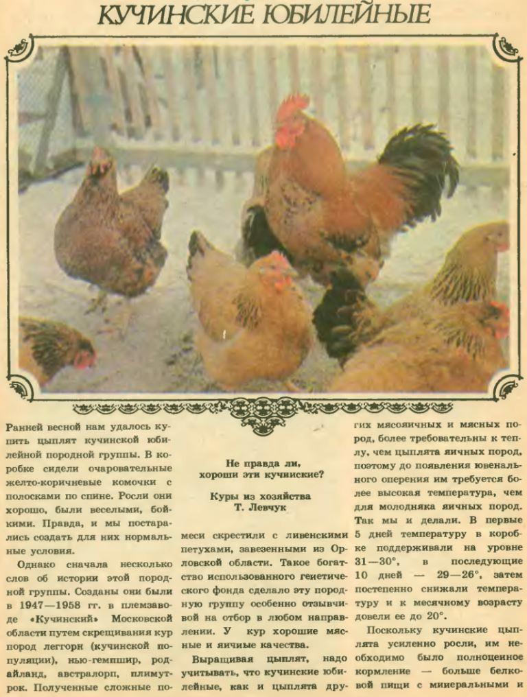 Красота, качество мяса и яйца шоколадного цвета, всё это — куры породы маран