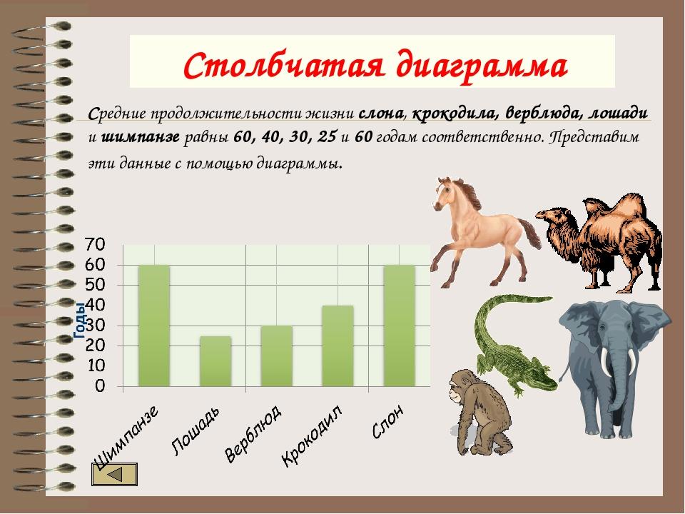 Сколько живут лошади? научно доказанная длительность жизни