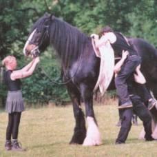ⓘ blog | абсент, конь - знаменитые лошади. абсент - чистокровный ахалтекинский жеребец, на котором в 1960 году сергей филатов стал первым советским олимпийским чемпио ..