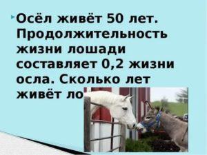 Все о продолжительности жизни лошадей: что влияет, сколько живут и как ее продлить