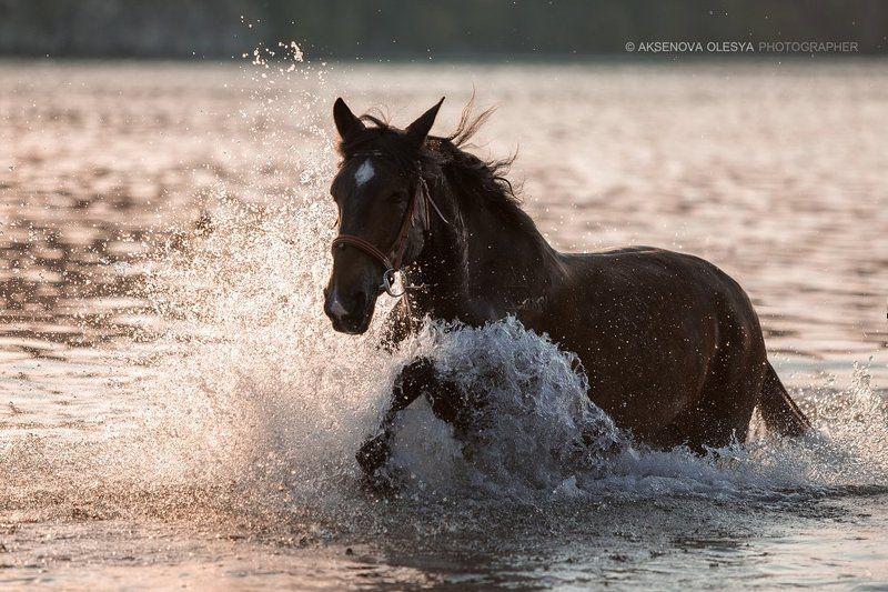 Лошади вода картинки (35 фото) скачать обои