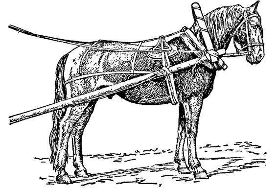 Что такое вальтрап и зачем он нужен лошади