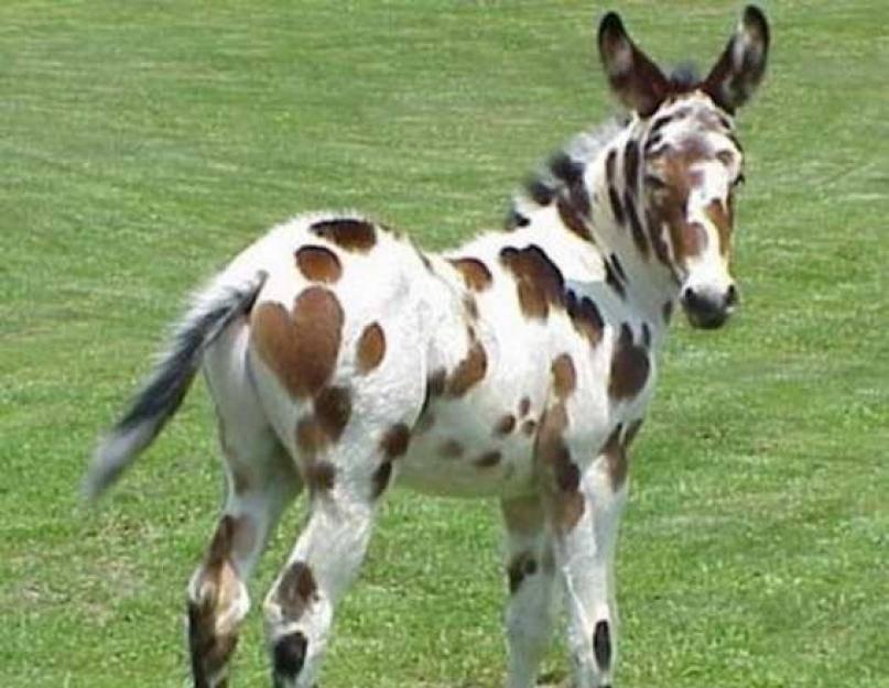 Гибриды лошадей с другими животными