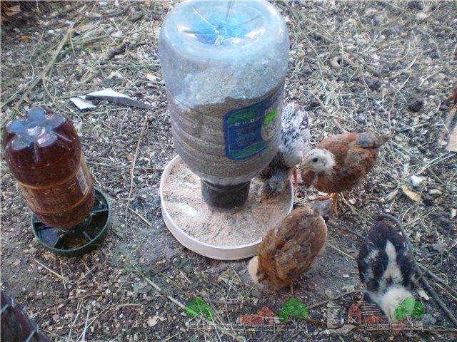 Поилка для цыплят своими руками: фото, оригинальные идеи поилка для цыплят своими руками: фото, оригинальные идеи