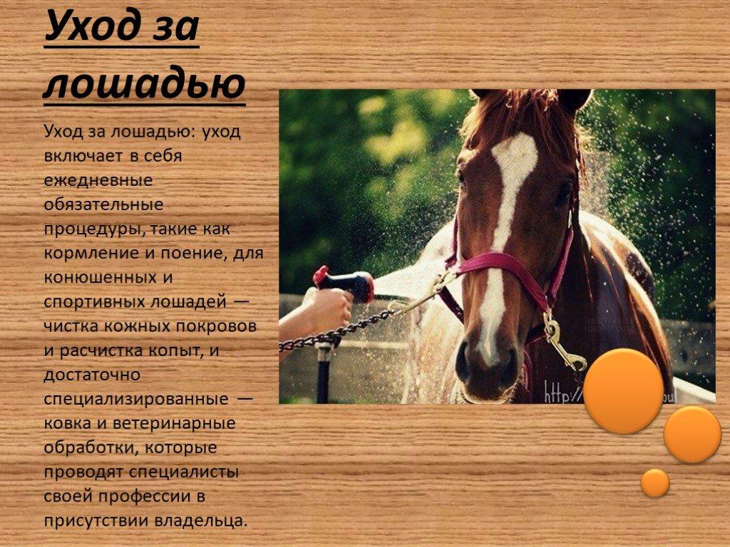 Основы правильного содержания и ухода за лошадьми