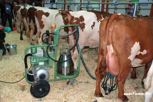Доильный аппарат для коров: обзор, описание, характеристики, отзывы :: syl.ru
