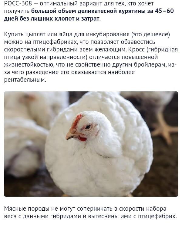 Вес бройлера по дням таблица росс 308