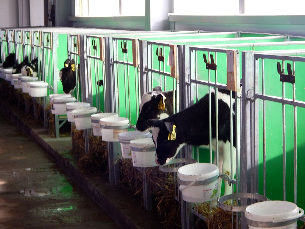 Виды кормушек для коров  и как сделать емкость самостоятельно