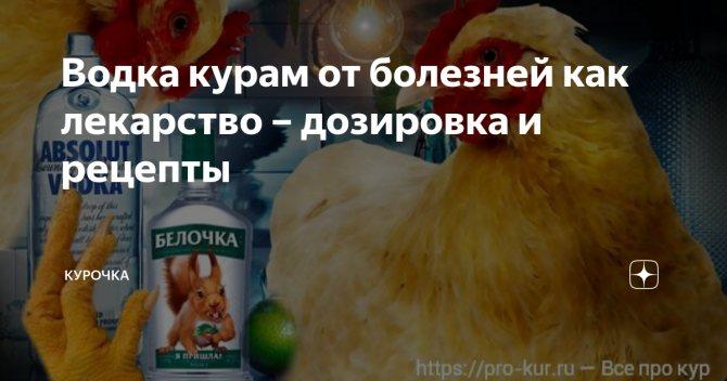 Схема пропойки цыплят-бройлеров антибиотиками и витаминами, рекомендуемые препараты